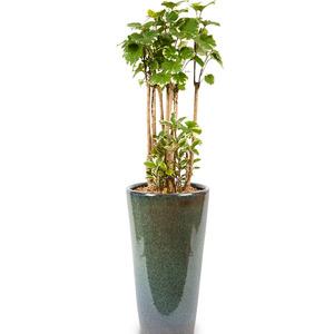 관엽식물인디6