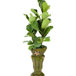 떡갈잎 고무나무6