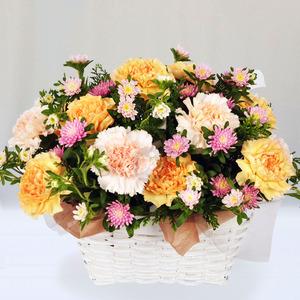 꽃향기(50)
